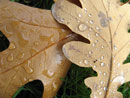 Таня Гочева - Щастливите сълзи на есента